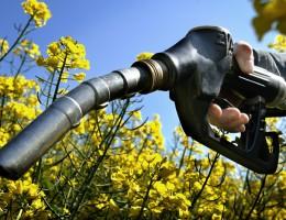 O przyszłości biopaliw