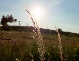 Polskie rolnictwo w Europie