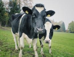Rozwiązania Grupy EPL na kryzys w rolnictwie