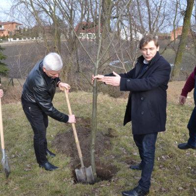 sadzenie drzewa 27.02.2017 (1)
