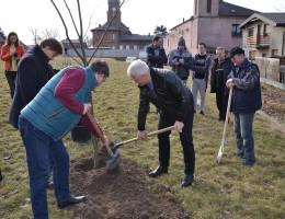 6 tysięcy drzew w ramach akcji Drzewo dla Polski