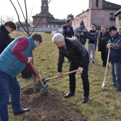 sadzenie drzewa 27.02.2017 (3)