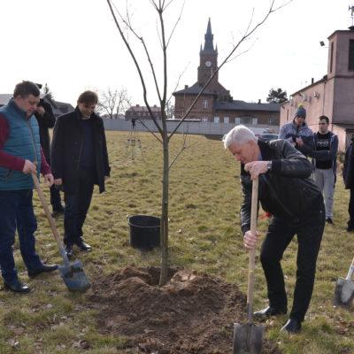 sadzenie drzewa 27.02.2017 (4)