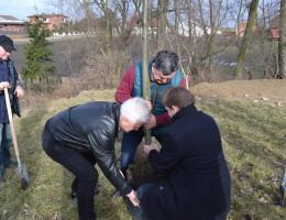 """""""Drzewo dla Polski"""" – akcja Ludowców, która ma zrekompensować wycinki"""
