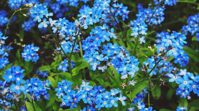 flowers-787996_960_720