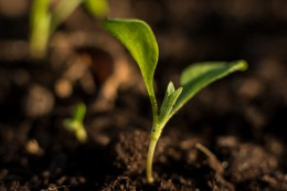 Posłowie PO-PSL w obronie europejskich nawozów i rolnictwa