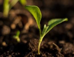 Jak pogodzić zdrową żywność, ochronę środowiska i wydajność rolnictwa w UE?
