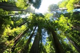 Ochrona klimatu – PE chce, by państwa UE rekompensowały wycinki lasów
