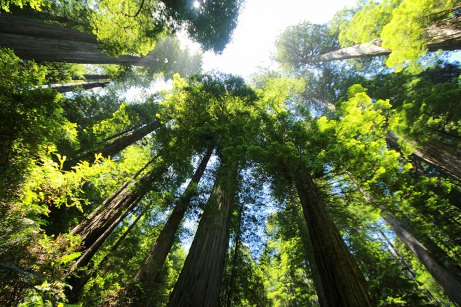 sequoia-274158_960_720