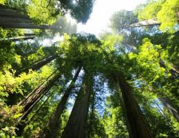 Przyszłości polityki leśnej UE – debata