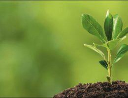 Poseł dr Andrzej Grzyb: środki ochrony roślin w UE – bezpieczniej dla zdrowia i środowiska, racjonalnie i efektywnie dla rolnictwie