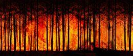 Zmiany klimatyczne, a pożary lasów w Europie